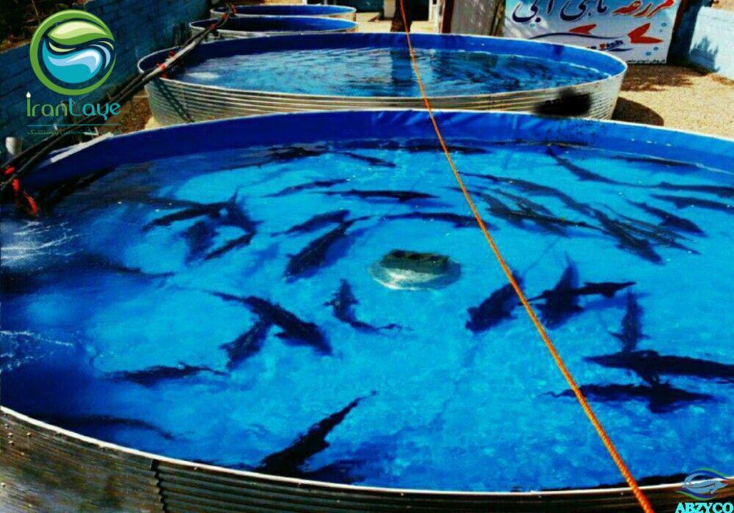 استخر پرورش ماهی